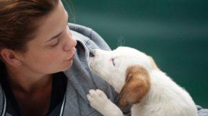 human dog relationship
