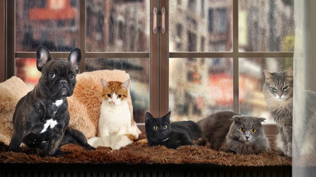 best pets for small homes